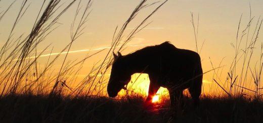 Русская народная – Выйду ночью в поле с конём
